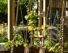Soirée-Jardins-Jardin-2015-64-w